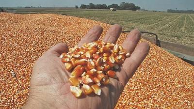 Los precios de los granos a 2026: no habrá grandes subas