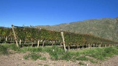 Radiografía de la crisis vitivinícola: entre la caída del consumo, más costos y los reclamos