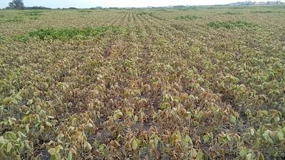 En Entre Ríos se cerró una de las tres peores cosechas de los últimos 18 años