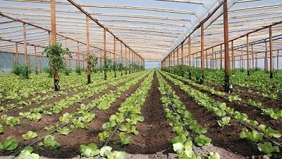Buscan fortalecer las Buenas Prácticas Agrícolas en los productores frutihortícolas