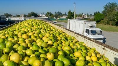 Argentina superó los controles de calidad y vuelve a exportar limones a Japón