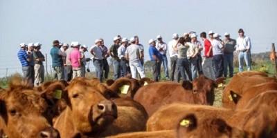 Técnicos y productores, mano a mano por una ganadería más eficiente