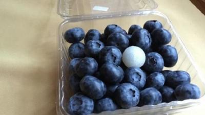 Solución automatizada para la cosecha del arándano azul