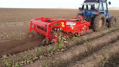 Grimme sumó la hileradora WH200 para el cultivo de la papa