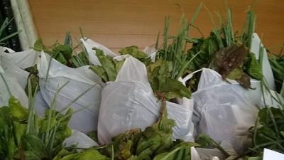 Primera experiencia de Compra Pública para abastecer programas alimentarios