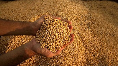 La recolección de soja ya logró cubrir el 50,7% del área apta con un rinde medio nacional de 38,2 qq/Ha