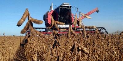 Buen clima y excelentes rindes elevan la proyección de soja a 56 millones de toneladas
