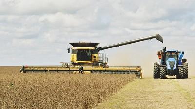 La demora de la cosecha perjudica la calidad de la soja de segunda