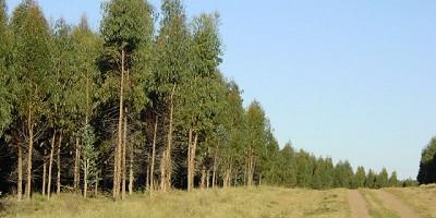 El RENATRE presentó el Manual de Buenas Prácticas Forestales en la Mesa Cuatripartita de Corrientes