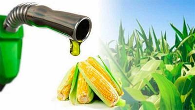 Prductores de etanol de EEUU analizan comprar maíz a Brasil