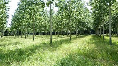 Realizarán prácticas pre-profesionales en la Estación Forestal de la Provincia