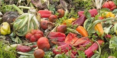 Desperdicio de alimentos: utilizar la innovación sostenible para reducir lo que tiramos