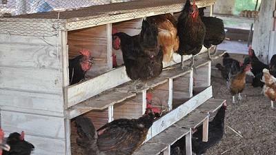 Producir huevos agroecológicos, una alternativa de reconversión