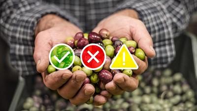 Semáforo de Economías Regionales: Las hortalizas mostraron un crecimiento debido a cambios de hábito de consumo en cuarentena