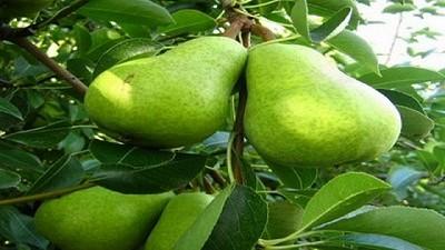 Algunas propuestas para el crecimiento de la fruticultura argentina