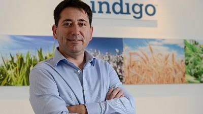 Indigo anuncia su nueva estructura con foco en la región