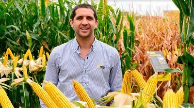 Nicolás Brandstater - El maíz, la soja, y por qué hay que apuntar a seguir mejorando el manejo