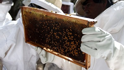 Investigación: Compartir abejas podría ser beneficioso para los agricultores