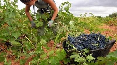 La Embajada Argentina en China le abre sus puertas a la vitivinicultura y buscará potenciar sus exportaciones