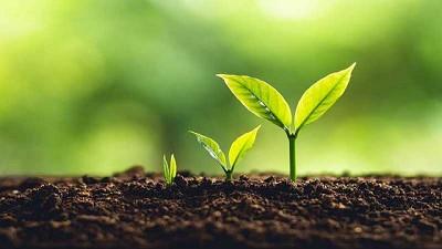 Investigación ayuda a agricultores a elegir los mejores cultivos para proteger suelos