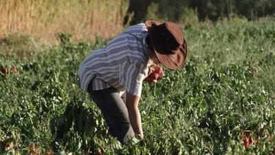 Acuerdo salarial: aumento para los trabajadores rurales permanentes