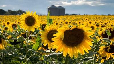 Agricultura presentó la metodología de elaboración de estimaciones agrícolas y lanzó dos nuevos productos