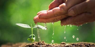 La mitad de la producción mundial de alimentos se debe a los fertilizantes