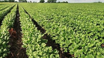 Europa aprueba la importación de la nueva soja genéticamente modificada de Bayer