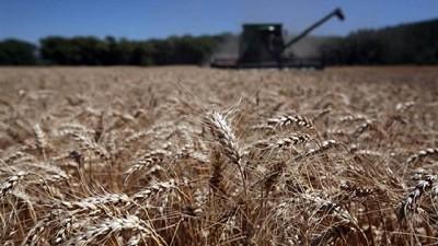 La sequía impulsa al trigo a valores máximos en seis años en el mercado de Chicago