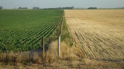 Septiembre, caída del 10 % en la actividad inmobiliaria rural