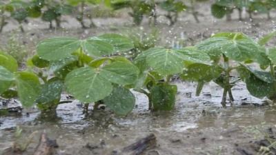 Registro de lluvias caídas en las ultimas horas - 21/10/2020 al 22/10/2020