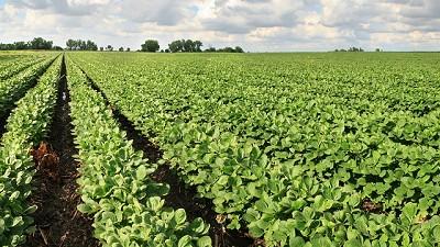 La falta de humedad tambalea la siembra de soja en la zona núcleo