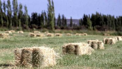 Agricultura destinó 13 millones de pesos para asistir productores de Tierra del Fuego