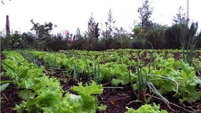 El MDA presentó la primera encuesta de arrendamientos hortícolas en la provincia de Buenos Aires