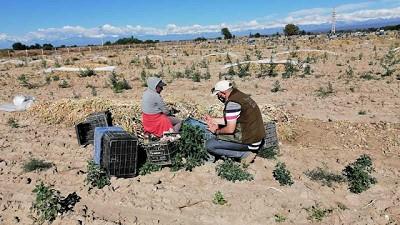 El RENATRE detectó 7 niños en situación de trabajo infantil en establecimientos rurales de Mendoza