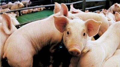 Basterra se reunió con productores del sector porcino