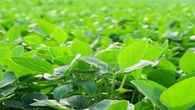 Si la lluvia no escasea, la cosecha gruesa vendrá con muy buenos números