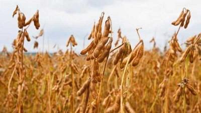 El USDA redujo su proyección en la producción de soja, maíz y trigo en Argentina