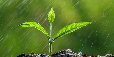 Algo de lluvia hacia el Oeste - CCA/Agrositio