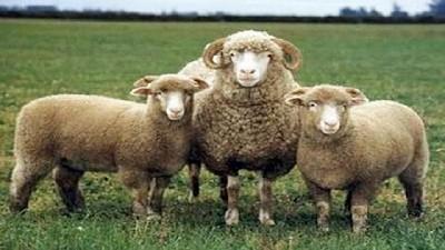 El ministro de desarrollo agrario anunció la apertura de la convocatoria 2021 a proyectos de la ley ovina