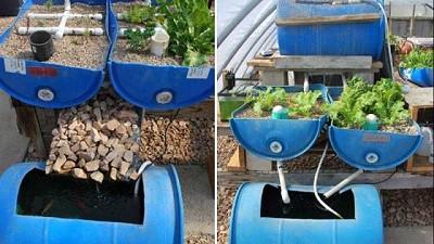 Cómo hacer un sistema acuapónico vertical para pequeños patios y casas