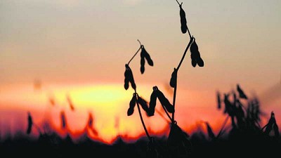 Fertilizantes y herbicidas más caros: cómo queda la relación insumo/producto