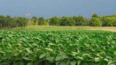Monitoreo de plagas en el cultivo de soja