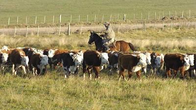 Se espera menor oferta ganadera y mayor demanda interna y externa de carne