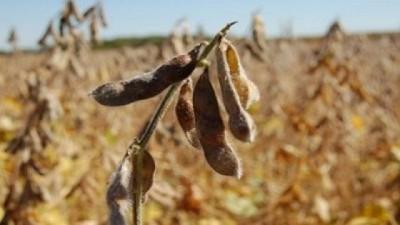 ¿Cambio de tendencia en el  precio de la soja?, por Manuel Alvarado Ledesma - Agrositio