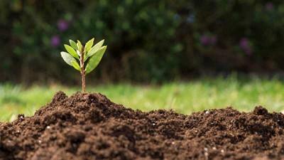 Microorganismos: una tendencia sustentable y efectiva para el agro