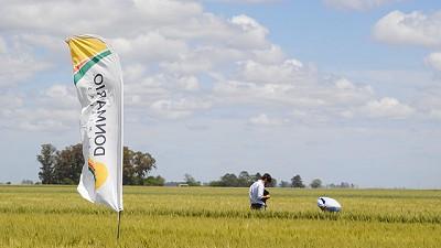 Con una propuesta sólida y opciones para cada productor DONMARIO encara la campaña de trigo 2021