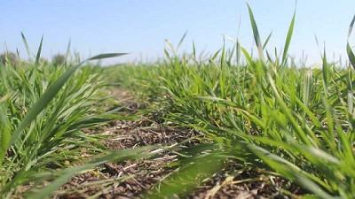 Monitoreo de plagas en lotes con destino a trigo