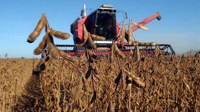 Soja 20/21: la cosecha más baja de los últimos 10 años en la región