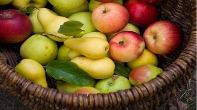 Latinoamérica: La nueva meca de las manzanas y peras argentinas